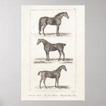 Vintage 1800s Horse Old Breeds Arabian Hunter Race Poster