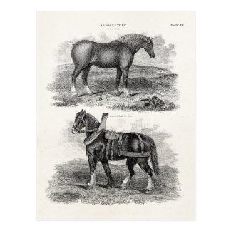 Vintage 1800s Horse Retro Agricultural Horses Postcard