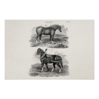 Vintage 1800s Horse Retro Agricultural Horses Poster