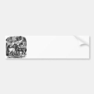 Vintage 1800s Horses Arabian Cart Cossack Horse Bumper Sticker