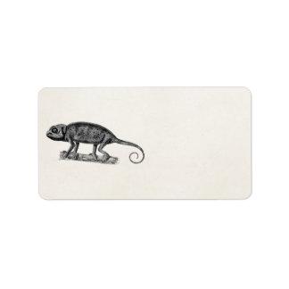 Vintage 1800s Iguana Lizard Illustration Iguanas Label
