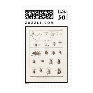 Vintage 1800s Insects Bug Beetles Illustration Postage