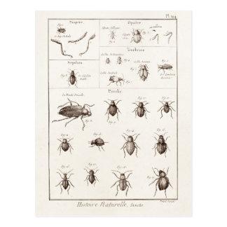Vintage 1800s Insects Bug Beetles Illustration Postcard