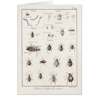 Vintage 1800s Insects Bug Beetles Illustration Stationery Note Card