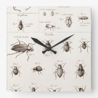 Vintage 1800s Insects Bugs Beetles Illustration Square Wall Clock