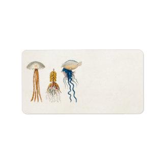 Vintage 1800s Jellyfish Illustration - Jelly Fish Label