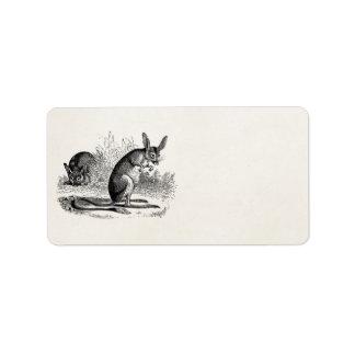 Vintage 1800s Jerboa Retro Kangaroo Rat Template Label