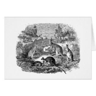 Vintage 1800s Kangaroo - Australian Kangaroos Greeting Card