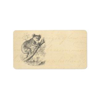 Vintage 1800s Koala Bear Illustration Parchment Label