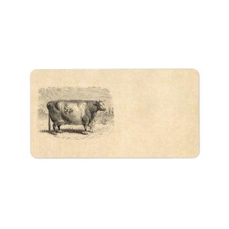 Vintage 1800s Large Durham Cow Retro Cows Template Address Label