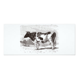 Vintage 1800s Large Dutch Cow Retro Cows Template