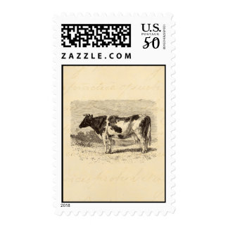 Vintage 1800s Large Dutch Cow Retro Cows Yellow Postage