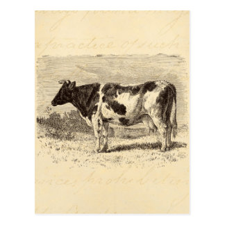 Vintage 1800s Large Dutch Cow Retro Cows Yellow Postcard