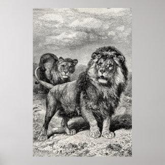 Vintage 1800s Lion Lionesse Big Cat Illustration Poster