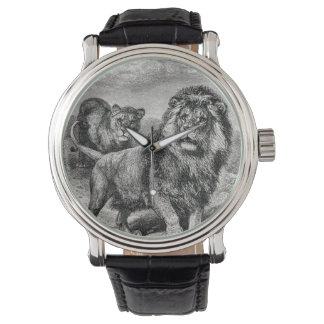 Vintage 1800s Lion Lionesse Big Cat Illustration Watch
