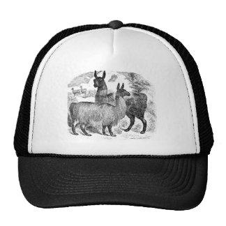 Vintage 1800s Llama Retro Alpaca Llamas Template Trucker Hat