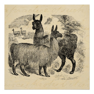 Vintage 1800s Llama Retro Pink Llamas Template Poster