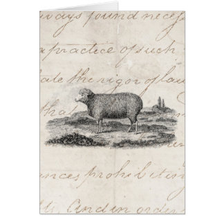 Vintage 1800s Merino Sheep Ewe Lamb Template Card