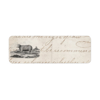 Vintage 1800s Merino Sheep Ewe Lamb Template Label