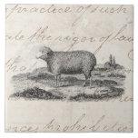 Vintage 1800s Merino Sheep Ewe Lamb Template Large Square Tile