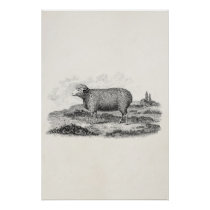 Vintage 1800s Merino Sheep Ewe Lamb Template Poster