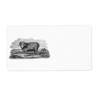 Vintage 1800s Merino Sheep Ram Lamb Template Personalized Shipping Labels