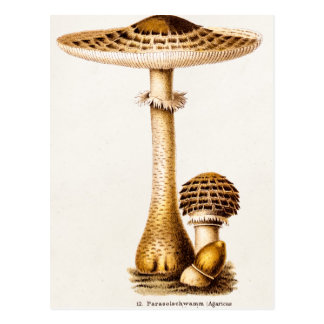 Vintage 1800s Mushroom Agricus Mushrooms Template Postcard