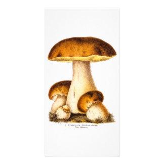 Vintage 1800s Mushroom Edible Mushrooms Template