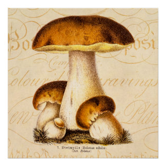 Vintage 1800s Mushroom Edible Mushrooms Template Poster