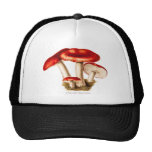 Vintage 1800s Mushroom Red Mushrooms Template Trucker Hat