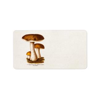 Vintage 1800s Mushroom Scaber Brown Mushrooms Label
