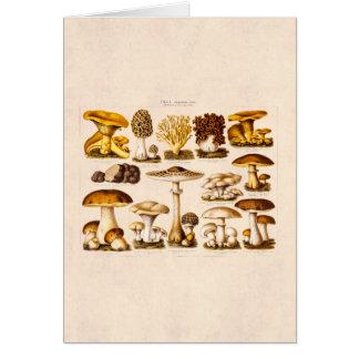 Vintage 1800s Mushroom Variety  Mushrooms Template Card