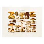 Vintage 1800s Mushroom Variety  Mushrooms Template Post Card