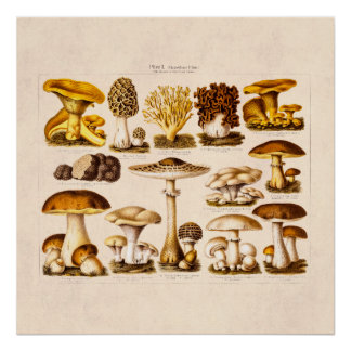 Mushrooms Posters | Zazzle