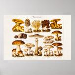 Vintage 1800s Mushroom Variety  Mushrooms Template Poster