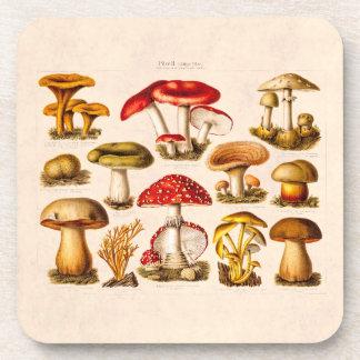 Vintage 1800s Mushroom Variety Red Mushrooms Beverage Coaster