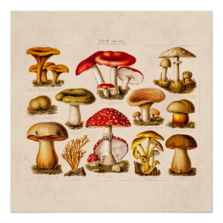 Mushroom Posters | Zazzle