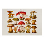 Vintage 1800s Mushroom Variety Red Mushrooms Posters