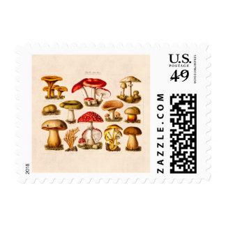 Vintage 1800s Mushroom Variety Red Mushrooms Stamp