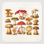 Vintage 1800s Mushroom Variety Red Mushrooms Square Stickers