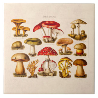 Vintage 1800s Mushroom Variety Red Mushrooms Tile