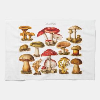 Vintage 1800s Mushroom Variety Red Mushrooms Towel
