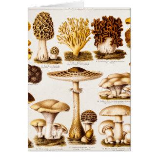 Vintage 1800s Mushroom Variety Template