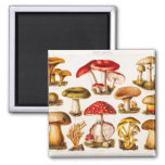 Vintage 1800s Mushroom Variety Template 2 Inch Square Magnet