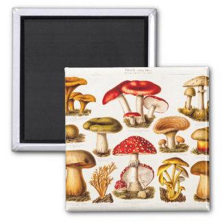 Vintage 1800s Mushroom Variety Template 2 Inch Square Magnet