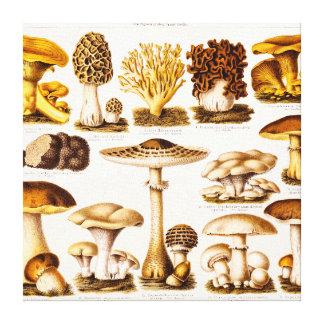 Vintage 1800s Mushroom Variety Template Canvas Print