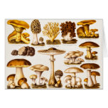 Vintage 1800s Mushroom Variety Template Stationery Note Card
