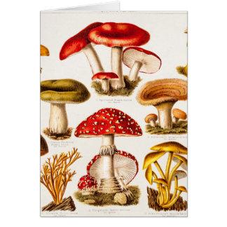 Vintage 1800s Mushroom Variety Template Card