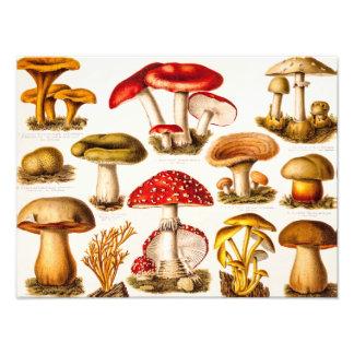 Vintage 1800s Mushroom Variety Template Photo Print