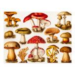Vintage 1800s Mushroom Variety Template Post Cards